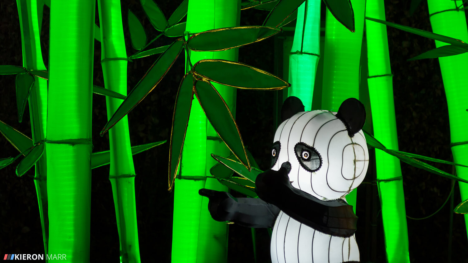 Longleat Festival of Light 2014 - Baby Panda