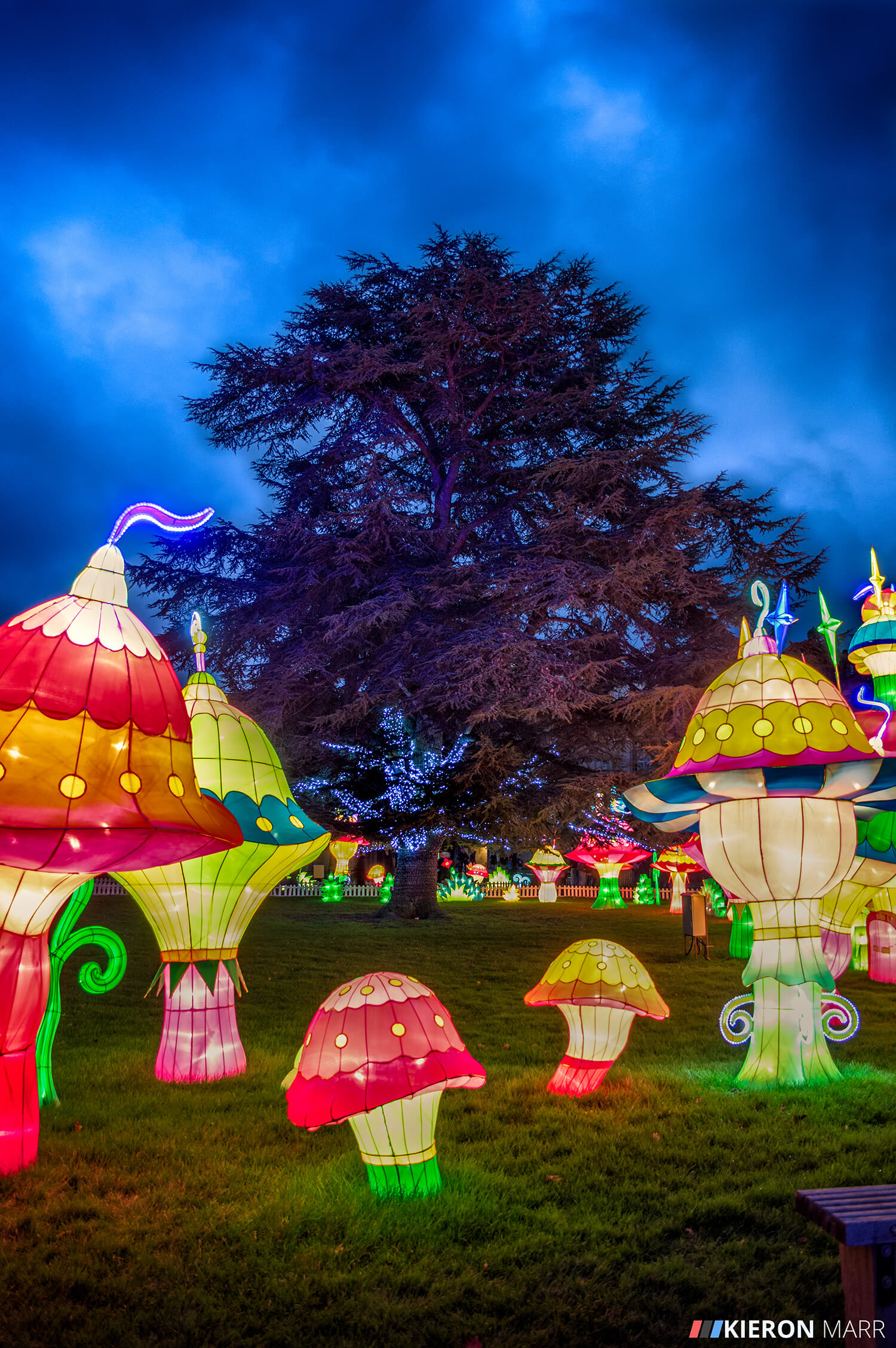 Longleat Festival of Light 2014 - Colourful Mushroom Garden