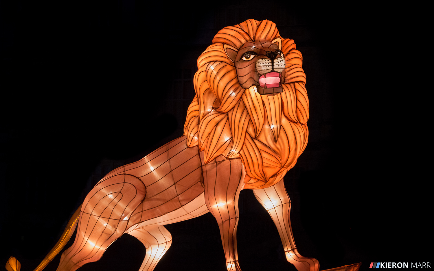 Longleat Festival of Light 2014 - Lion